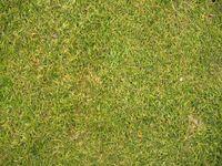Damen-Abschlag, naher Blick auf den Rasen