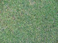 Herren-Abschlag 11, naher Blick auf den Rasen